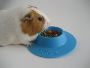 Ginger can't flip her food over any more! STAYbowl™ keeps the kibble off the cage floor.Ging