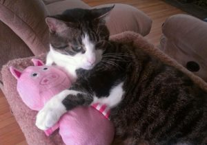Pusspuaa and his toy piggy.IMAG0410-1