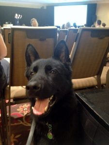K9 Küster attends Nashville Blogpaws 2015K9 Küster
