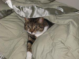 Bella hiding in blanketIMG_1668