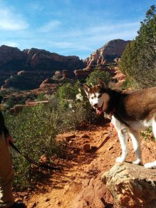 My Husky, Isis hiking in beautiful Sedona, ArizonaIMG_20141210_125035
