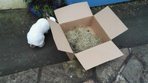 We have an update on the wild hedgehog we rescued.We've called it Reggie and its nesting in ou