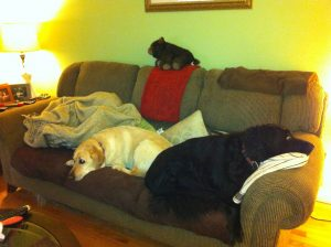 Devon and Crumble from Coast Dragonfly Products caught napping during a particularly arduous winter