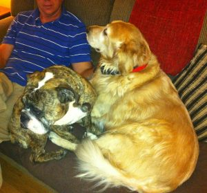 Hunter and Cooper the Coast Dragonfly Products pack members settling down to watch TVBroad Suggestio