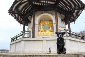 Feeling Zen at the London Peace Pagoda