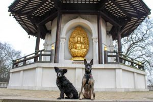 The Dogvine Does The London Peace Pagoda