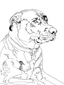 Had a local artist capture Jasper in sketch form from the same photo. Stoic, isn't he.Jasper_S