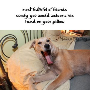 Haiku by Dog: Friend