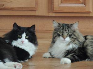 Milo and Dimitri
