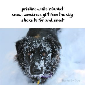 Haiku by Dog: Snow