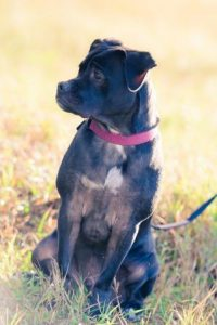 Thanks to Annabelle Denmark Photography for this photo.Onyx Our Shelter Rescue Pup