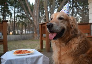 MyDogLikes enjoys a delicious birthday dinner and dessert to celebrate Harley's 9th Birthday!H