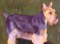 This puppy dog pet art pet portrait was drawn for commission. I drew it in pastels and sold the orig