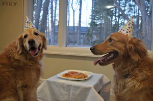 MyDogLikes enjoys a delicious birthday dinner and dessert to celebrate Harley's 9th Birthday!D