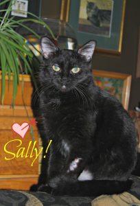 My new cat Sally sally