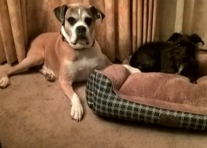 Sally is always stealing Sammi's bed!Sammi and Sally