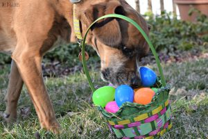 MyDogLikes has an egg hunt! Spring is here, let the shenanigans begin!MyDogLikes Egg Hunt