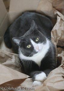 Tessa, a.k.a. Danger Cat SweetTessa