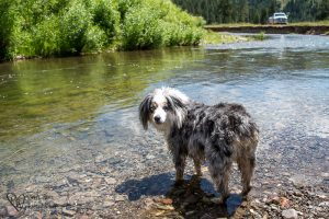 She has finally decided swimming is a fun thing.Torrey by the river