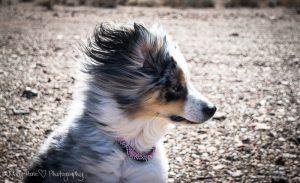 Torrey in the wind