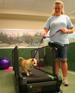 An extra outlet for energetic dogs or a great way to walk off the pounds if the weather keeps you in