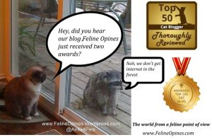 Just received two awards for Feline Opines, very exzcited! tukrocky_2awards