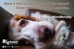 Wagtown MotivationMonday