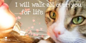 http://www.chirpycats.com/are-you-letting-your-cat-walk-all-over-you/ Watermarked(2017-02-14-1453)