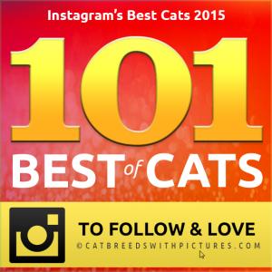 best cats of instagram 2015