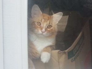 This is my kitty Blazer, he jumps up in the window to see us when he hears our car come up the drive