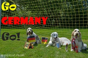 Since my Kuvasz sister is German born, we are rooting for Germany in the World Cup today!gbgv kuvasz
