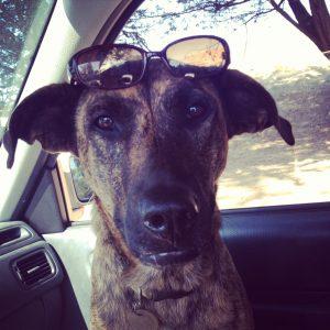 kayo with sunglasses
