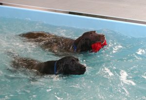 Our water dogs like these labs just can't get enough of our indoor swimming pool.Swimming Pool