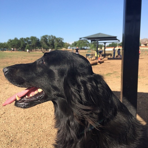 lucy dog park