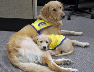 CCI pups- Micron & Yaxley