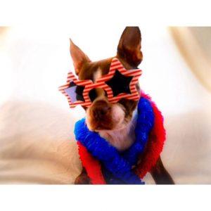 Nothing spells patriotism like star sunglasses!bean classroom