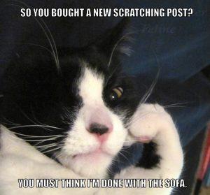 scratchingpost