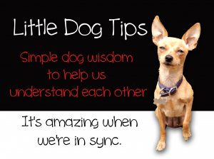 Simple Dog Wisdom, Little Dog Tips