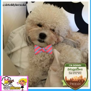 Can't wait to meet all of you!Teddy Brewski at the BlogPaws conference