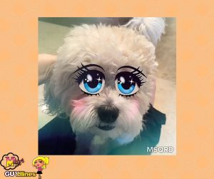 Now he can turn into me and I can turn into him via the MSQRD app!Teddy Brewski on #MSQRD