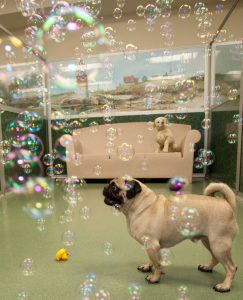 Playing indoors can be just as fun!Bubbles!