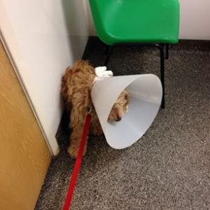 Charlie's just been neutered!
