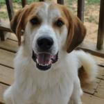 Profile picture of Flash