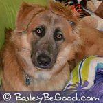 Profile picture of Bailey & JM (DrawingMom.com)