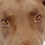 Profile picture of Hawk aka BrownDog