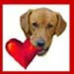 Profile picture of Sue at For Love of a Dog