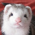 Profile picture of Snotface Ferret