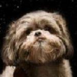 Profile picture of debi